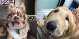hond gestoken door bij