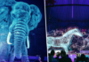 wreed-vrije circusshow