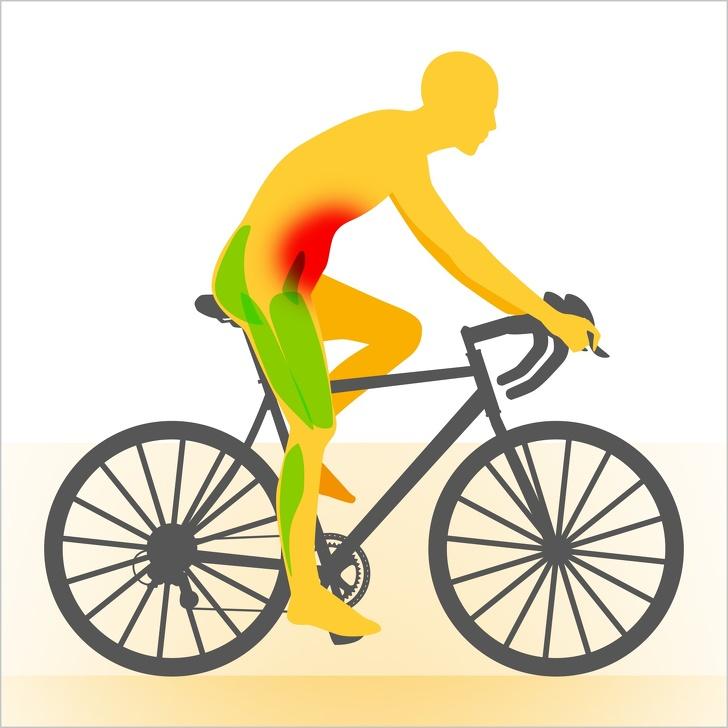 dit zijn de spieren die je gebruikt bij het fietsen