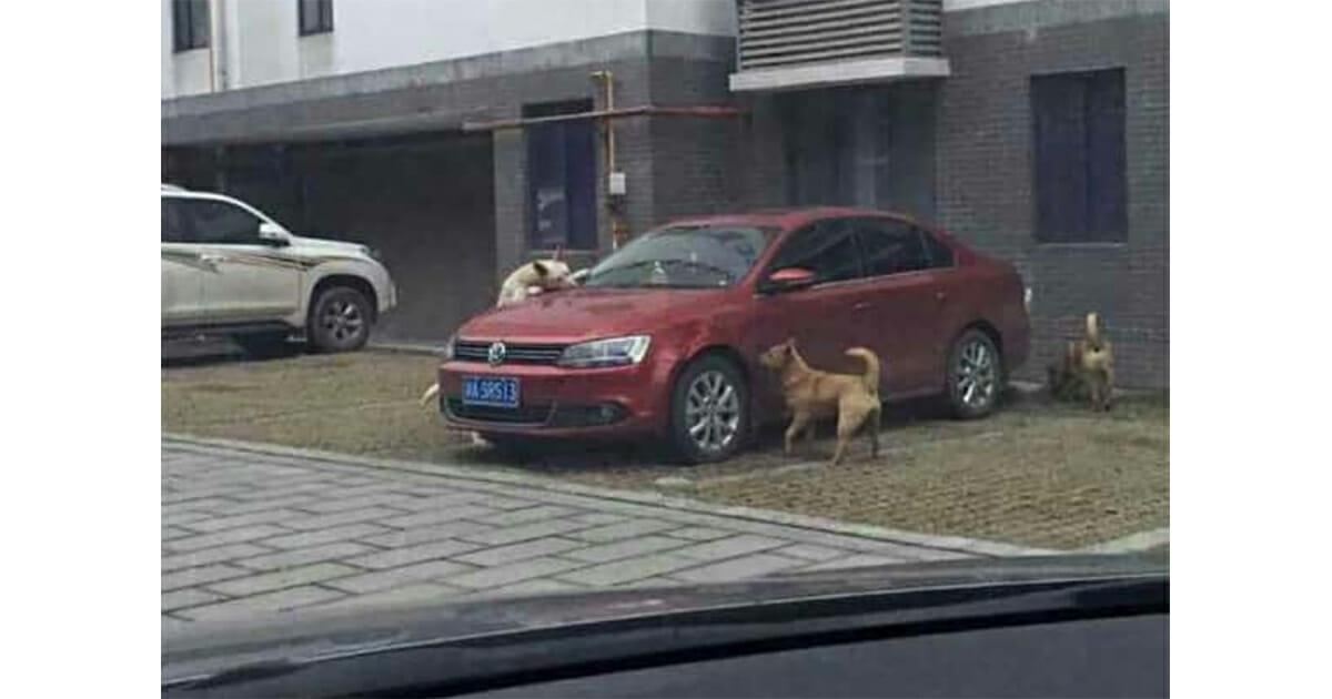 karma voor bestuurder van auto