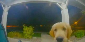 verdwaalde hond belt thuis aan