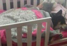 Mama kijkt of peuter nog slaapt - begint te filmen als ze ziet dat ze met reddingshond slaapt