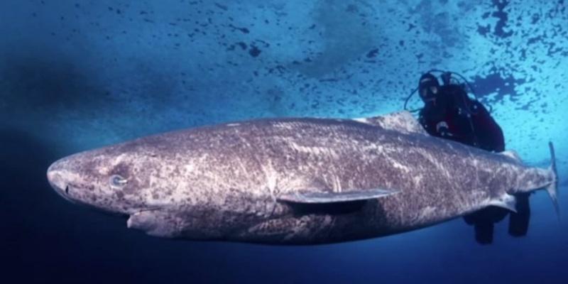 oudste haai