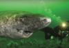 Wetenschappers ontdekken 512 jaar oude haai, waardoor het de oudste levende gewervelde op aarde is
