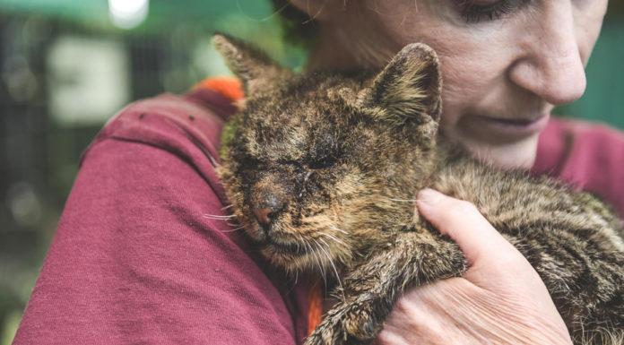 Vrouw knuffelt kat die geen aandacht kreeg, hij is zo blij dat hij lief begint te miauwen