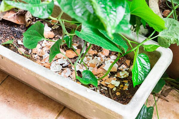 eierschalen in plantenbak