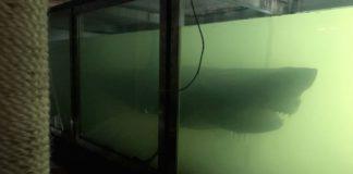 Man verkent verlaten dierenpark - tot hij enorme haai als een geest in een tank ziet drijven