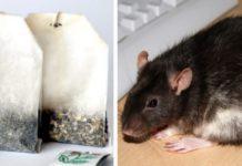 Gebruik theezakjes om ratten en spinnen uit je huis te houden