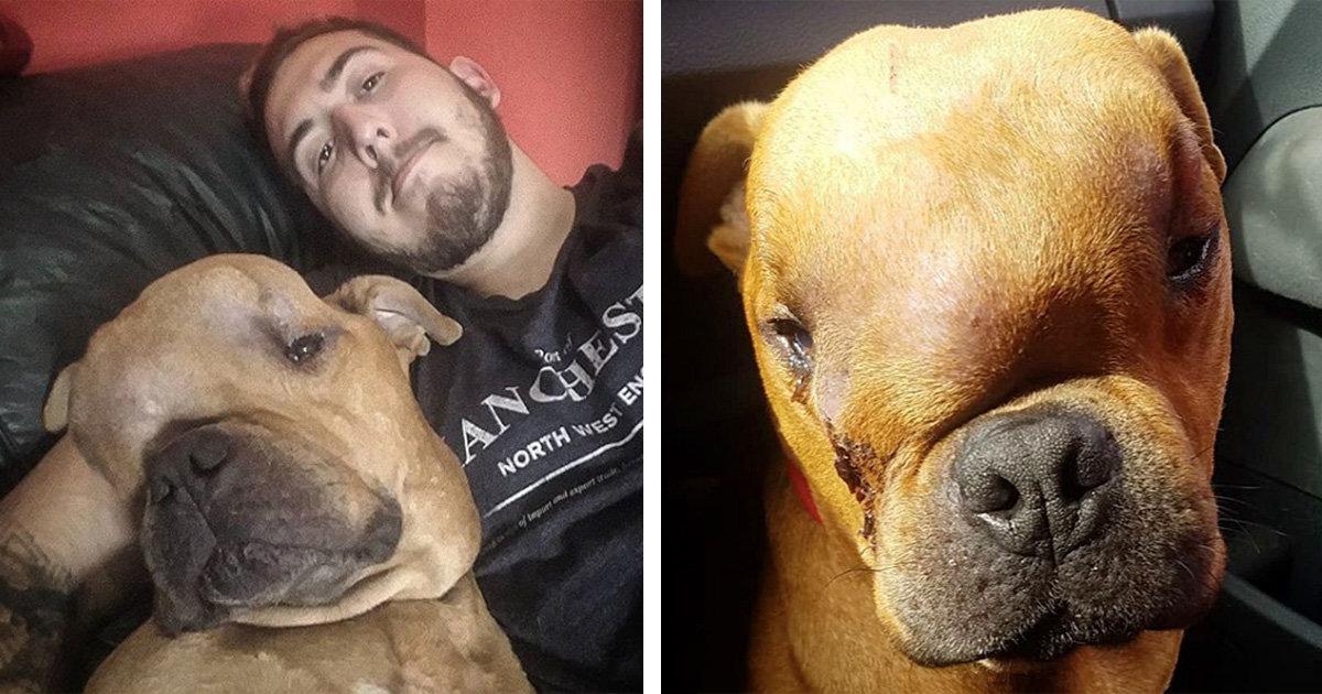 Man adopteert hond met enorme tumor, zodat hij liefde kan voelen tijdens zijn laatste dagen