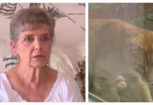 79-jarige vrouw veroordeeld tot gevangenisstraf voor het voeren van zwerfkatten in haar achtertuin