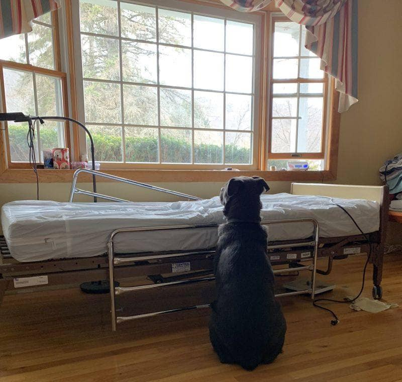 hond wacht op eigenaar naast zijn bed