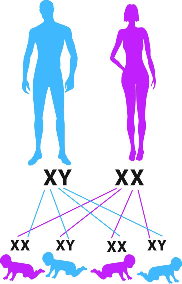 genen overgeven aan familieleden