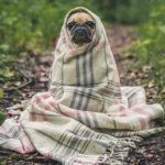 Nieuw onderzoek toont aan dat mensen meer van honden hun houden dan van andere mensen