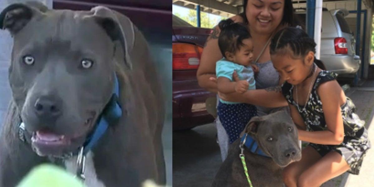 Pit bull sleept baby aan zijn luier uit een brandend huis en redt het hele gezin