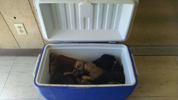 puppy's in koelbox