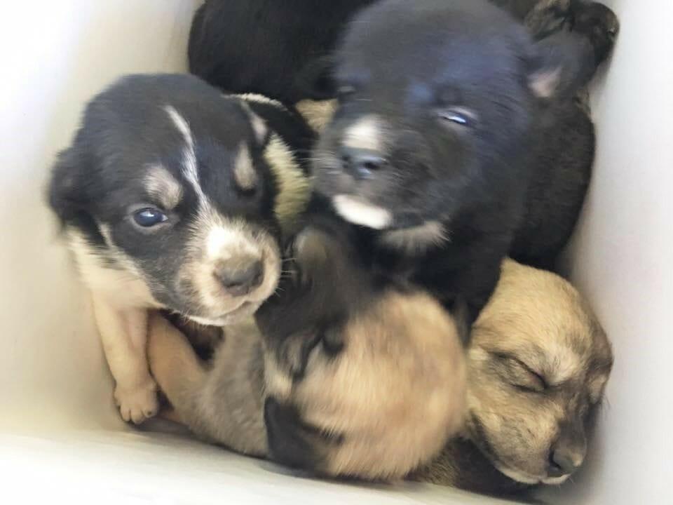 schattige puppy's