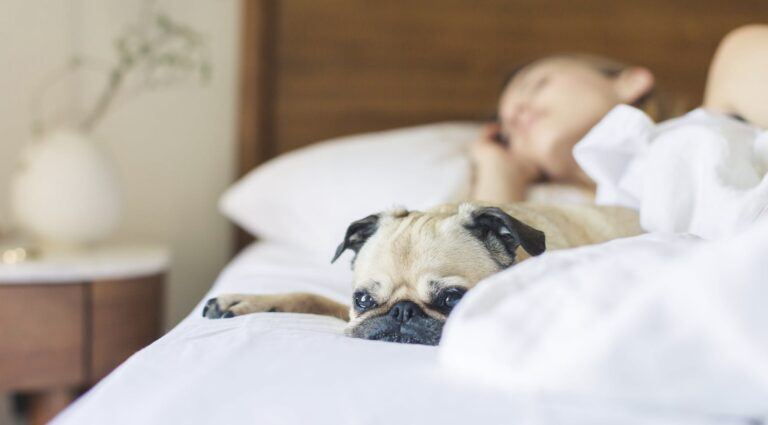 Slapen met je hond in bed is erg goed voor je gezondheid, laat nieuw onderzoek zien